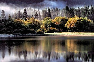 Forest Trees Lake Outdoor Nature Poster Print Wall Art Large Maxi