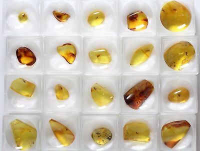 Baltic Amber Gemstone, Fossil insect inclusion, Fungus Gnat, Price per piece