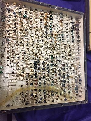 Huge Collection Dead BUGS Entomology Class School Insect Bug Collection US