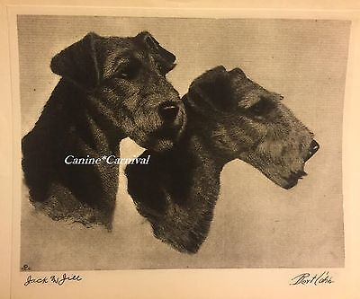 Dog Print 1931 AIREDALE TERRIER   JACK AND JILL by Bert Cobb