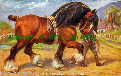 Vntge Art-N.Drummond~Handsome Clydesdale Stallion Horse Horses NEW Lg Note Cards