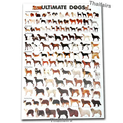 Ultimate Breeds Dog Poster More Than 100 Dogs Species Free Shipping Worldwide