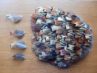 100+ Cock Pheasant Neck  Feathers Fly Tying Arts Crafts