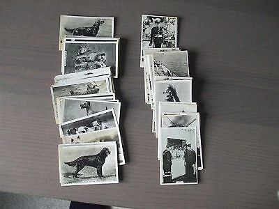 c1930's Senior Service cigarette cards  'Dogs' & 'The Navy' 63 cards-see details