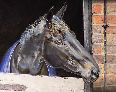 Many Clouds - Racehorse Art Print