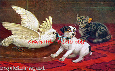 Cobbs~Jack Russell Terrier Puppy Dog~Cockatoo~Kitten~NEW Large Note Cards