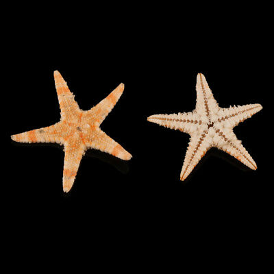 100pcs Mini Natural Flat Tan Starfish Seashells Beach Wedding Party Decor Crafts