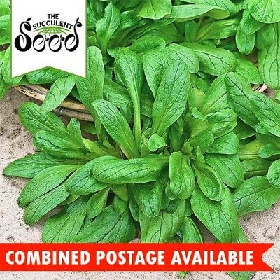 CORN SALAD - Lambs Lettuce (1200 Seeds) GOURMET GREENS Mache BULK