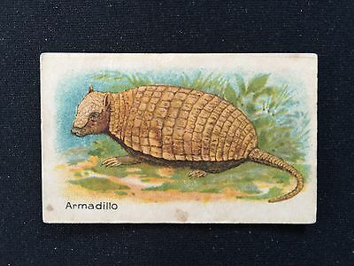 Cigarette Cards & Collectables **1 x African Tobacco, Animals**