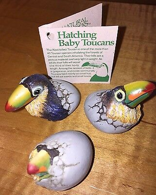 Set of 3 Baby Toucans Hatching Out of Egg Signed Figurines Resin Hatchlings