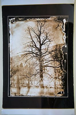 An original silver gelatin print from collodion glass negative by Borut Peterlin