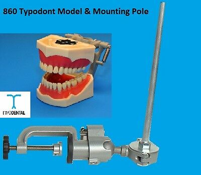 Typodont Dental Model 860 works with Columbia brand teeth & Mounting Pole