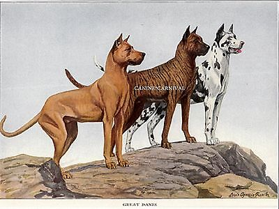 VINTAGE ANTIQUE 3 Great Dane DOGS 1919 RARE Art Print BRINDLE FAWN HARLEQUIN