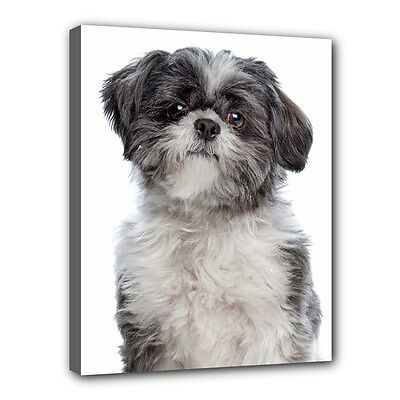 """New LHASA APSO Dog Art Portrait 11""""x14"""" Wrapped CANVAS PRINT Wall Hang Home Deco"""