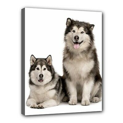 "ALASKAN MALAMUTE Dog Art Portrait 11""x14"" Wrapped CANVAS PRINT Wall Hang Deco"