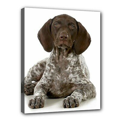"GERMAN SHORTHAIRED POINTER Dog Art Portrait 11""x14"" Wrapped CANVAS PRINT Deco"