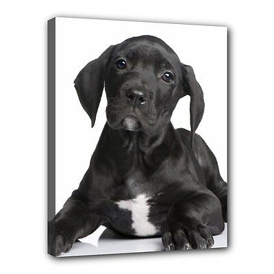 Black GREAT DANE CANVAS PRINT Dog Puppy Art Portrait Framed Wall Home Decor Gift