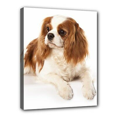 "New CAVALIER KING CHARLES SPANIELS Dog Art Portrait 11""x14"" Wrapped CANVAS PRINT"
