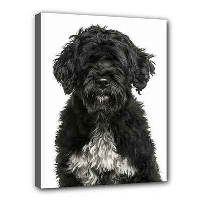 "PORTUGUESE WATER Dog Puppy Art Portrait 11""x14"" Wrapped CANVAS PRINT Wall Deco"