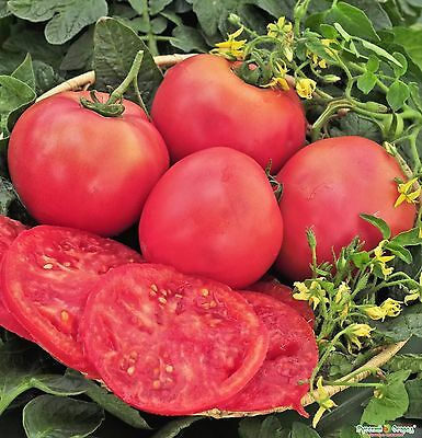 Seeds Tomato Mikado Pink Large Vegetable Organic Heirloom Russian Ukraine