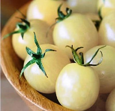 Seeds Cherry Tomato Snow White Vegetable Organic Heirloom Russian Ukraine