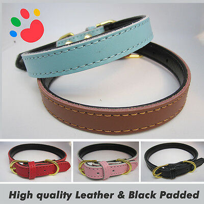 Padding Paws Strong Leather Black Padded Dog collar | Pet Cat Puppy