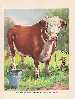 HEREFORD COW CATTLE  BULL  1930's CHILDRENS Vintage Art Print AE KENNEDY