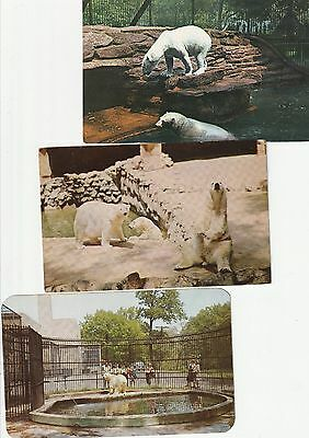 Vintage polar bear zoo postcards; posted 1962, 1959 & unposted