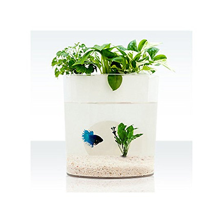 Purposefull Aquaponics Aquarium / Growing Bed - Fish Tank and Plant Water Filter