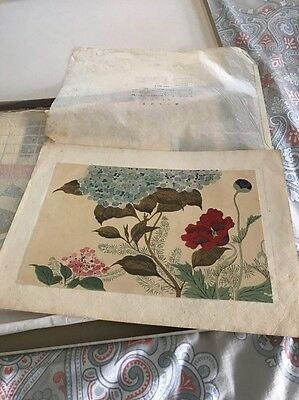Early 1900s Japanese Woodblock Print Hoitsu Jonin Frothy Poppy
