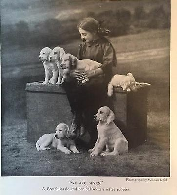 SCOTCH LASSIE WITH HER ENGLISH SETTER PUPPIES DOG  1919 RARE Art Print