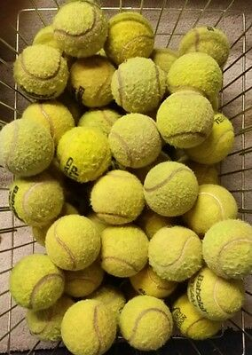 Well Used Tennis Balls For Dogs-20 40 50 60-Dog Ball / Toy-Lowest Price On Ebay!