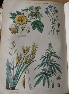 Antique Book Plate Plants Used In Clothing And Cordage Blackie & Son 1870 Print
