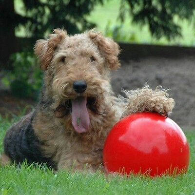 Boomer Ball Indestructible Solid Dog/ Puppy Toy 4 6 8 10 CM– RED Animals Toys