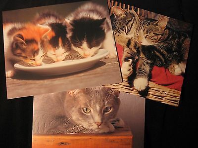 Kittens & Cats Lot of 3 Blank Note Cards Hallmark Calico Money Tiger Gray