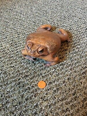 Vintage Taxidermy Bufo Marinus Stuffed Cane Toad Frog Great Condition Leather