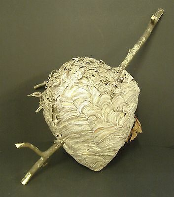 """Paper Wasp Hornets Nest Large 12"""" Long with Branches School Display Cabin Decor"""