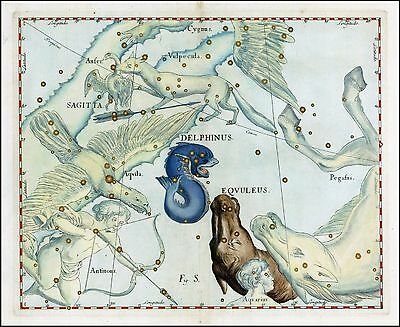 1687 old CELESTIAL MAP constellation DELPHINUS dolphin EQUULEUS small HORSE 4
