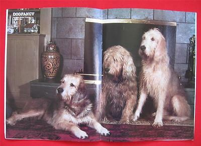 RARE ~ OTTER HOUND Issue ~ DOG FANCY Magazine ~ March 1983 ~ OTTERHOUND  #