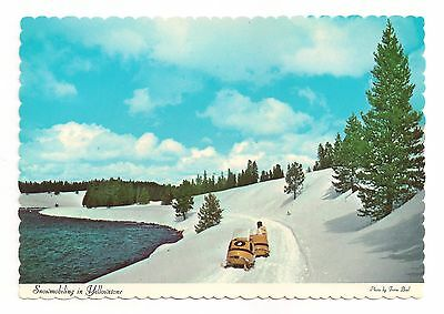 Snowmobiling in Yellowstone National Park Beautiful Vintage Postcard