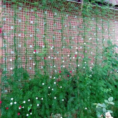 Millipore Net Climbing Frame Gardening rope Net Plant Fence Anti-Bird Devices