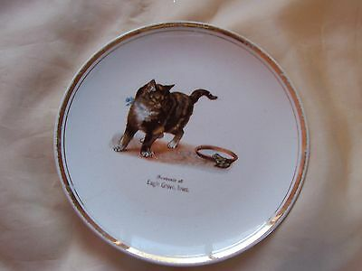 Vintage Tabby Cat Kitten With Frog Souvenir Plate Eagle Grove, IA Antique CUTE!