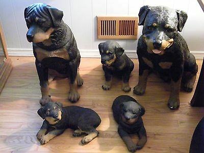 rottweiler statue's, (5), Over 20 years old, Huge Statue