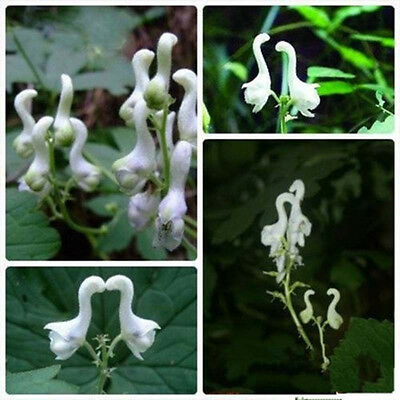 100pcs White Swan Flowers Seeds Home Garden Rare Plant Bonsai Beautiful Potted