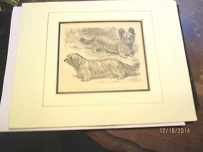 Wonderful Circa 1880 Skye Terrier Woodblock Engraving