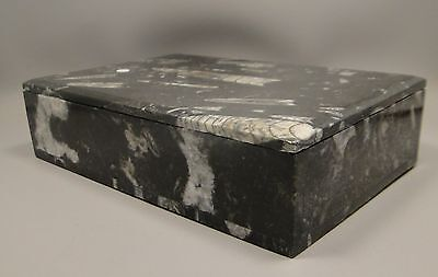 Orthoceras Fossil Stone Jewelry Box 8 inch Trinket Box Natural Gemstone #2