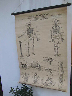 Antique Medical Anatomy And Physiology Charts J Wright And Sons 6 Charts