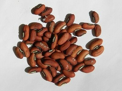Snake bean long Asian Vegetable 12 seeds No WA & TAS