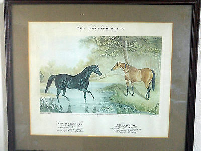 Rare J. Harris after J.F. Herring The British Stud. Racehorses Engraving Framed2