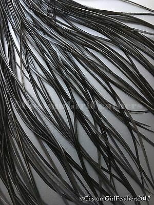 "Whiting Black Feathers For Fly Tying, Dyed Black Saddle Hackle, 6-12"" QTY 12"